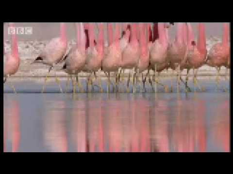 "Volcanoes from up high and ""dancing"" Flamingos – Wild South America"