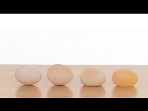 The Naked Egg Experiment – Sick Science!