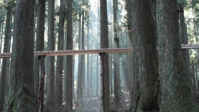 A giant forest xylophone plays Bach in this Japanese commercial