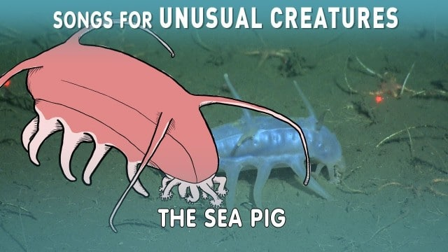 The Sea Pig –Songs for Unusual Creatures