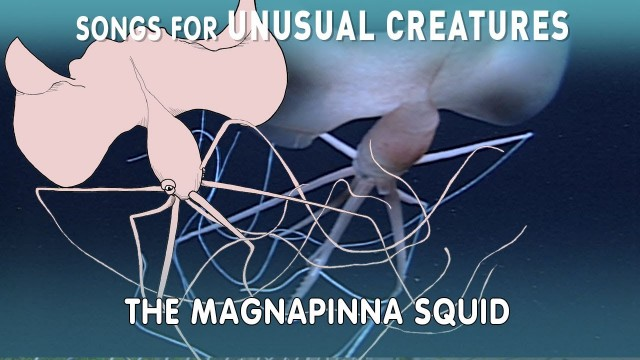Magnapinna Squid – Songs for Unusual Creatures