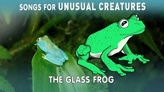 Glass Frog –Songs for Unusual Creatures