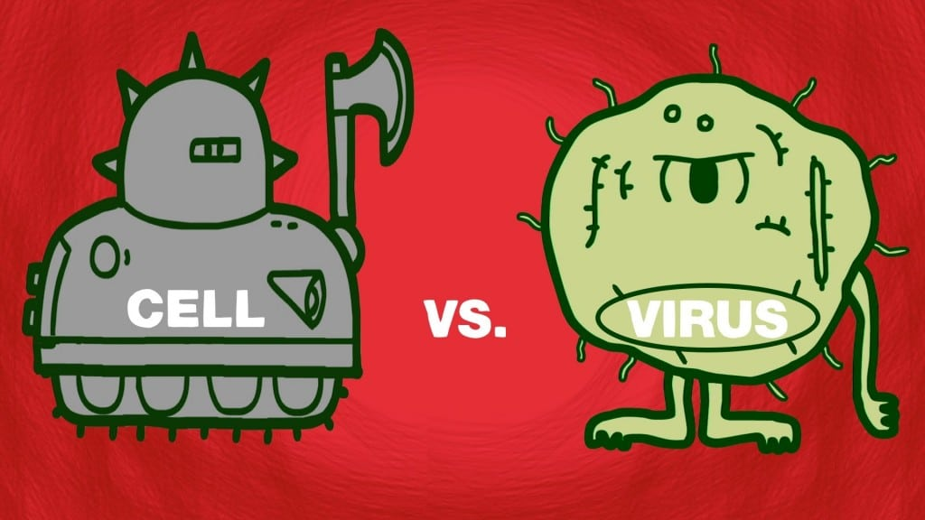 Cell Vs Virus A Battle For Health The Kid Should See This