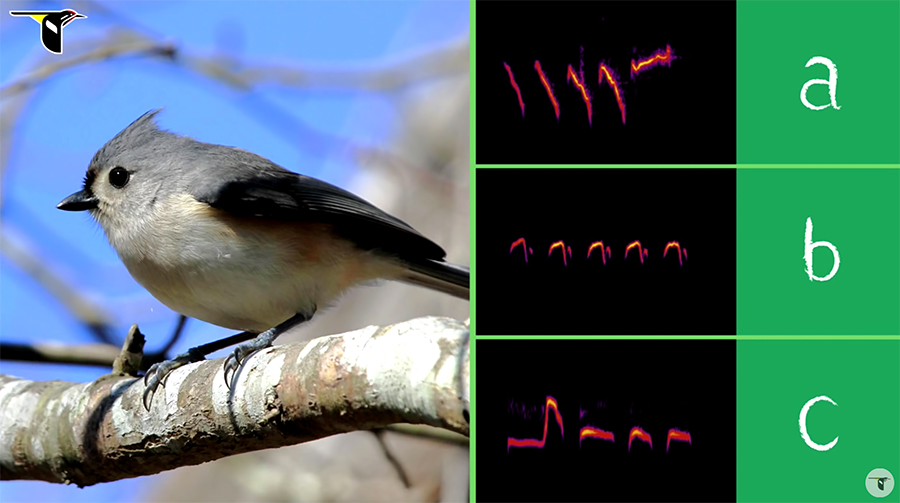 Tufted Titmouse bird song options