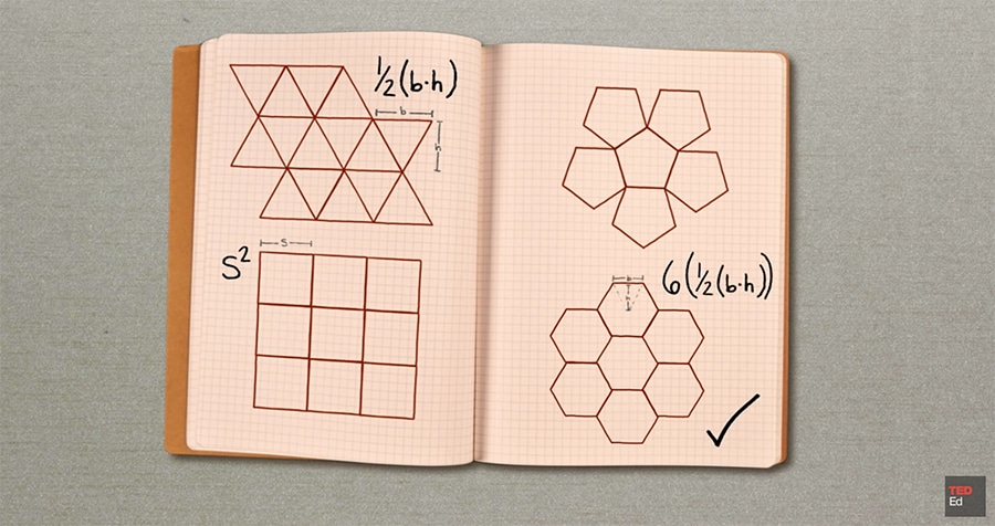 honeybees and hexagons - considering shapes