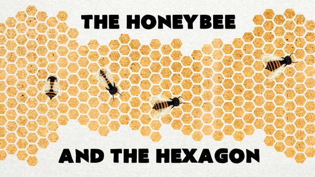 Why do honeybees love hexagons?