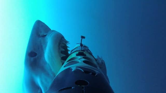 REMUS SharkCam: The hunter and the hunted
