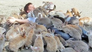 "Covered with bunnies on Japan's ""Rabbit Island"""