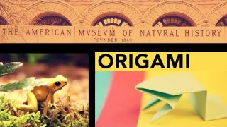 AMNH Origami: Fold a Jumping Frog in 13 Easy Steps