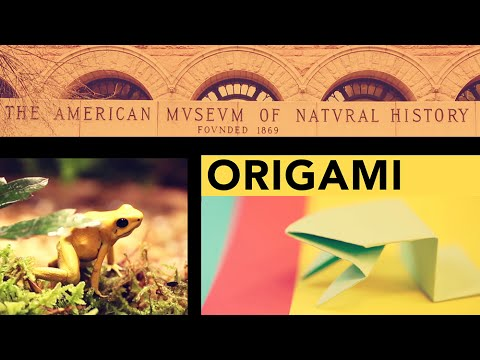 AMNH Origami Fold A Jumping Frog In 13 Easy Steps