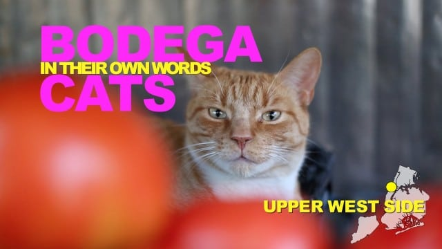 Bodega Cats In Their Own Words – WNYC