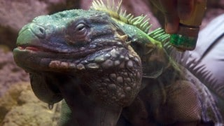 Reptile Rejuvenation – Wild Inside the National Zoo