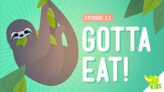 Gotta Eat! and Classifying Organisms – Crash Course Kids