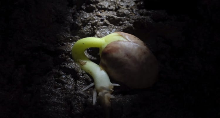 Hungry for seed scene two