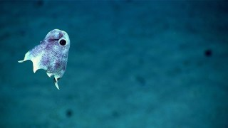 ROV footage of deep sea creatures from the coast of Puerto Rico