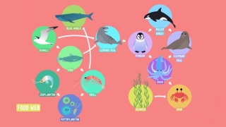 Home Sweet Habitat & Food Webs – Crash Course Kids