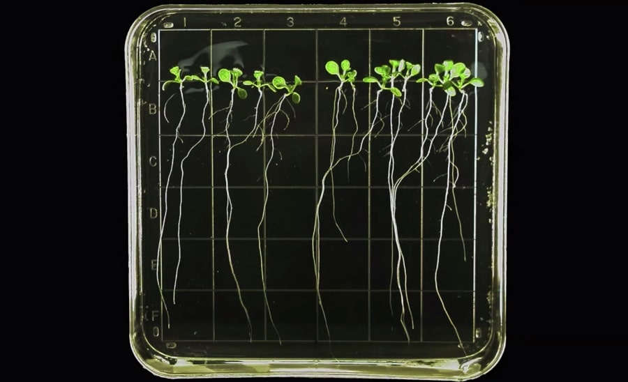 sprouts growing in space