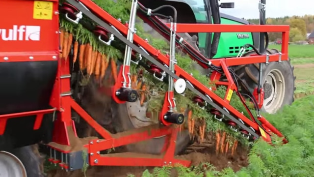 Harvesting carrots with ski lift-style 'toplift' machines