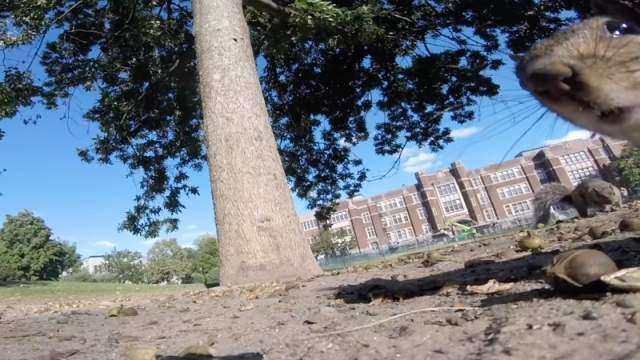 A squirrel takes a GoPro up into the tree branches