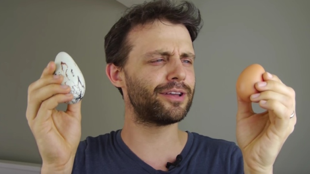 The Guillemot egg, an egg that saves its own life