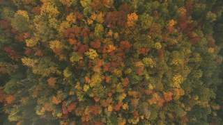 The autumal patchwork of Quebec's forest colors