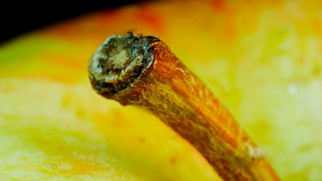 Everyday Objects In Macro