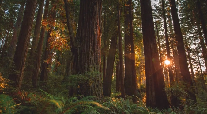 redwood by the pattiz brothers