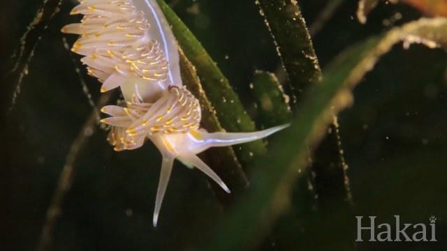 Seagrass: Life in the Underwater Meadows
