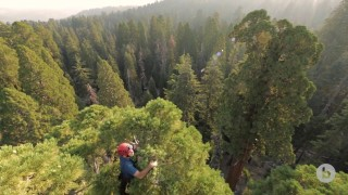 Each Tree Is Its Own Adventure: Climbing giant sequoias for science