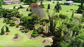 Pearl Fryar's world-renowned topiary garden of rescued plants