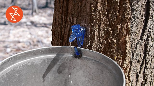 How Maple Syrup is Made | Où se trouve: Garland Sugar Shack