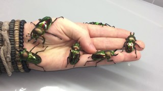 The large and surprising creatures of InsecthausTV