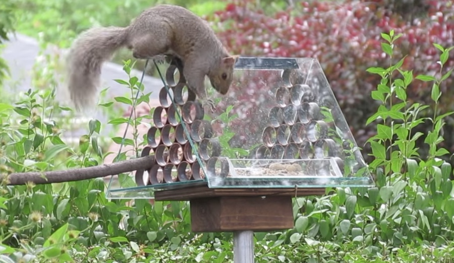 squirrel proofed?