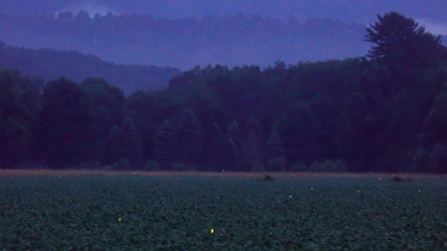 Fireflies sparkle in a Pennsylvania field at dusk