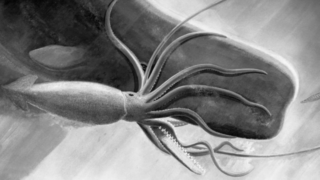 The Squid and the Whale: Evidence for an Epic Encounter