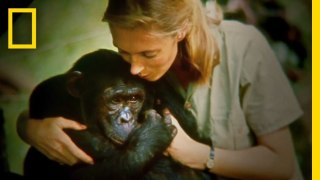 A Jane Goodall documentary made from 100+ hours of lost 1960s footage