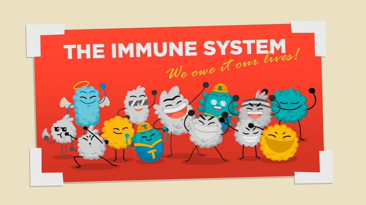 How Does Your Immune System Work The Kid Should See This