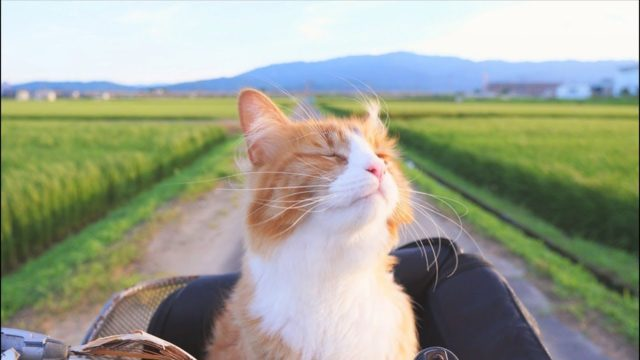 How Jun trained his cats to shake hands and ride a bike