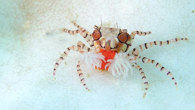 Saturation: Colorful Marine Creatures from Indonesia & The Philippines