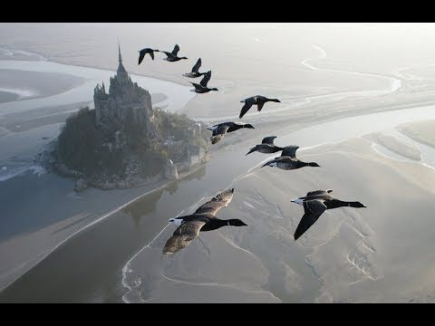 Christian Moullec flies his microlight with the birds