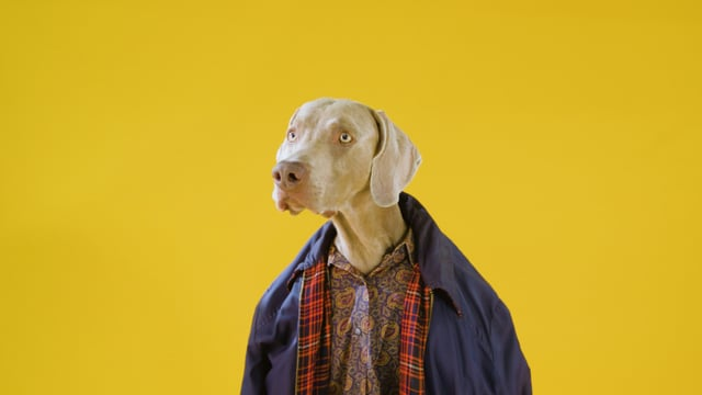 William Wegman, The Dog Photographer