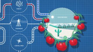 Using seawater and sunlight to grow sustainable food in the desert