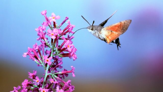 Hawk moths and The Art of Staying Stable