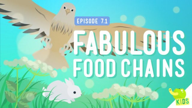 Fabulous Food Chains and The Dirt on Decomposers