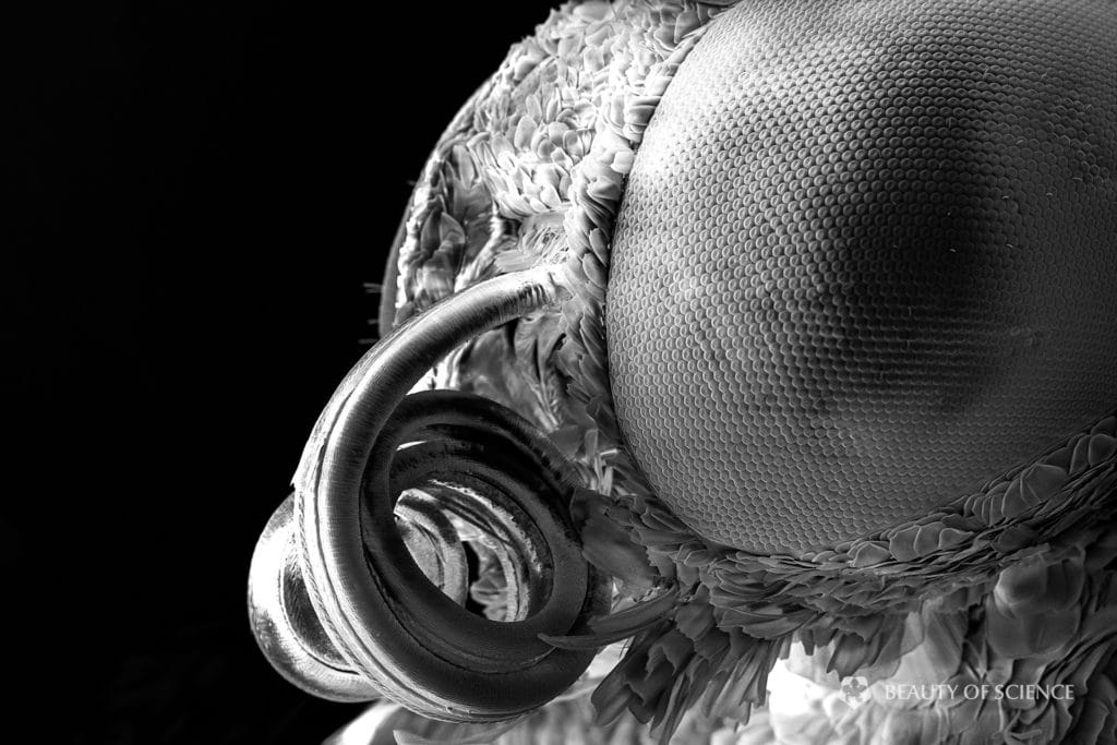 Microworld Unseen: SEM images of the Pale Grass Blue butterfly | The