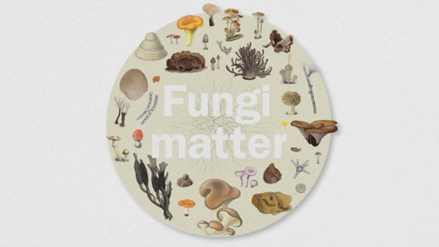 Fungi Matter, an animation for Kew