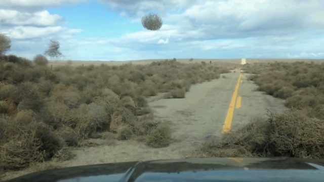 Attack of the Tumbleweeds