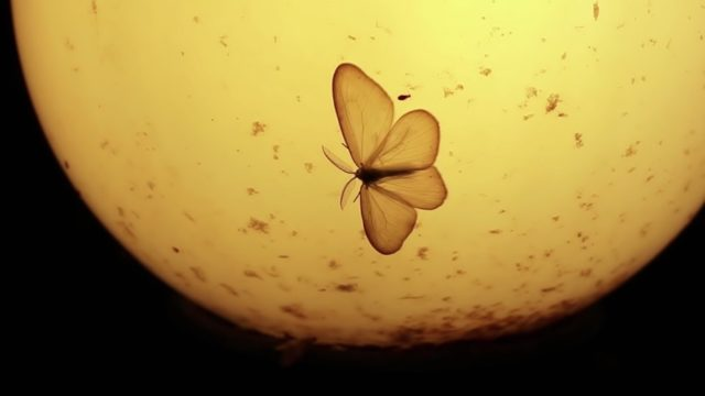 Why are moths obsessed with lamps?