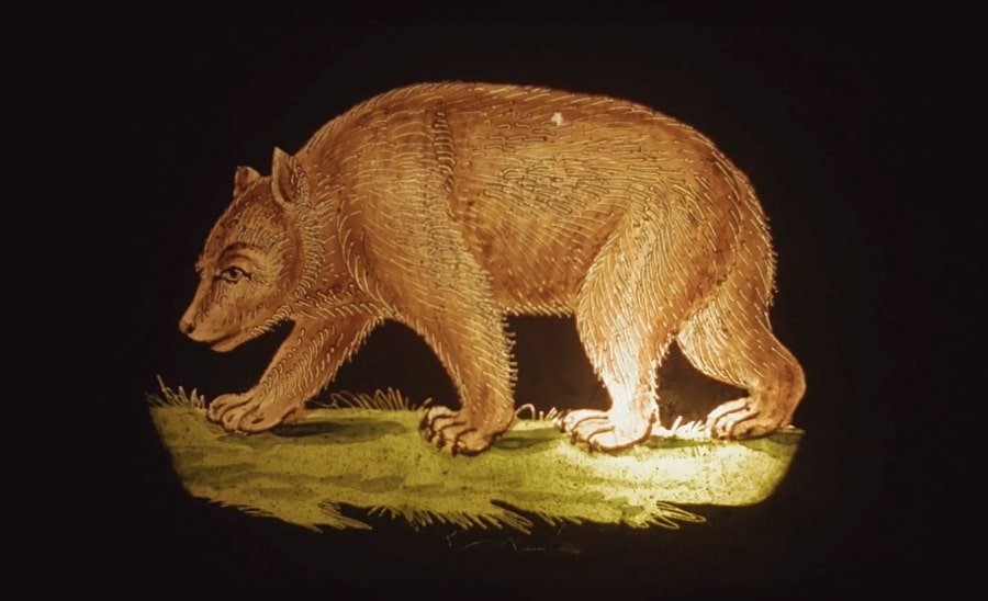 magic lantern slides bear