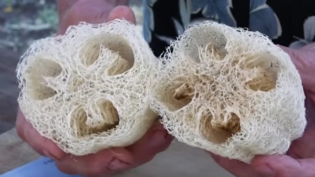 How are luffa/loofah sponges made?
